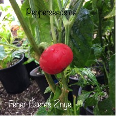 Feher Cseres Znye Pepper Seeds