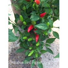 Zimbabwe Bird Pepper