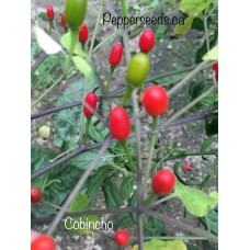 Cobincho Pepper Seeds