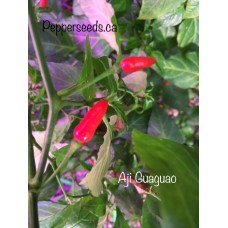 Aji Guaguao Pepper Seeds
