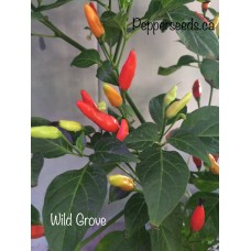 Wild Grove Pepper Seeds