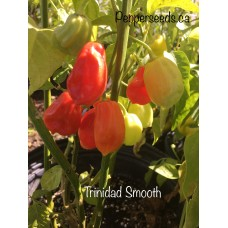 Trinidad Smooth Pepper Seeds