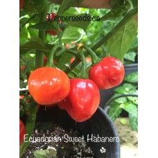 Ecuadorian Sweet Habanero Pepper Seeds