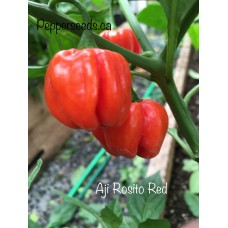 Aji Rosito Red Pepper Seeds