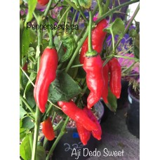 Aji Dedo Sweet Pepper Seeds