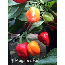 Aji Margariteno Red Pepper Seeds