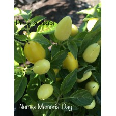 Numex Memorial Day Pepper Seeds