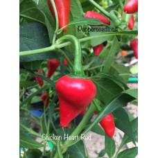 Chicken Heart Red Pepper Seeds