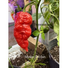 Monster Red Gum Pepper Seeds