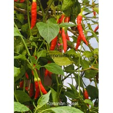 Romainian Sweet Pepper Seeds