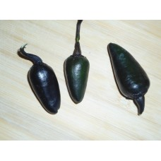 Black Jalapeno Pepper