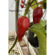7-Pot Primo x Lemon Drop Pepper Seeds
