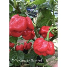 7-Pot Congo SR Giant Red Pepper Seeds