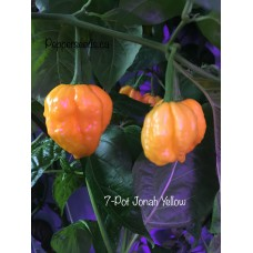 7-Pot Jonah Yellow Pepper Seeds