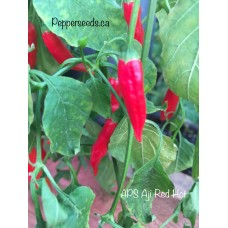 APS Aji Red Hot Pepper Seeds