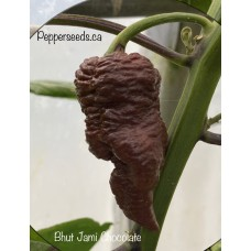 Bhut Jami Chocolate Pepper Seeds