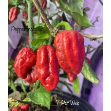 7-Pot Wes Pepper Seeds