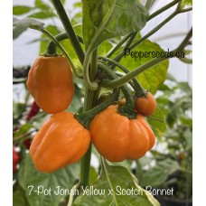 7-Pot Jonah Yellow x Scotch Bonnet Pepper Seeds