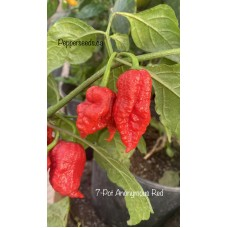 7-Pot Anonymous Red Pepper Seeds