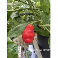 Red Rocoto Pepper Seeds