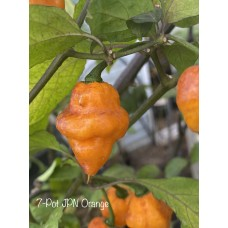 7-Pot JPN Orange Pepper Seeds