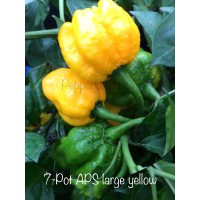 7-Pot APS large yellow Pepper Seeds