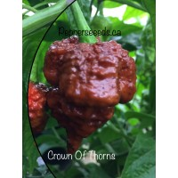 7-pot Crown Of Thorns Chocolate Pepper
