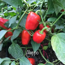 Aleppo Pepper Seeds