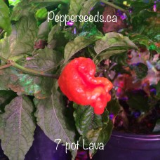 7-Pot Lava Red Pepper Seeds