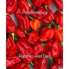 Habanero Long Red