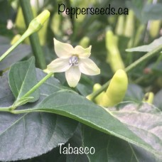 Tabasco Pepper Seeds