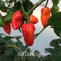 Aji Dulce Long Red Pepper Seeds