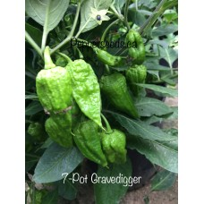 7-Pot Gravedigger Pepper