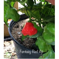 Aji Fantasy Pepper Red