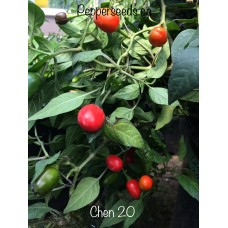 Chen 20 Pepper Seeds