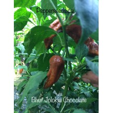 Bhut Jolokia Chocolate Pepper
