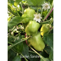 Garden Sunshine Pepper Seeds