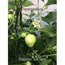 Bulgarian Teardrop Pepper