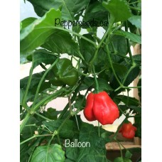 Balloon Pepper