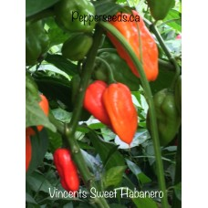Vincents Sweet Habanero Pepper Seeds