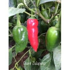 Giant Jalapeno Pepper Seeds