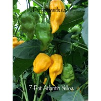 7-Pot Atlantic Yellow