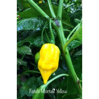 Fatalii Mortalii Yellow Pepper Seeds