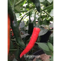 Banjarmasin Pepper