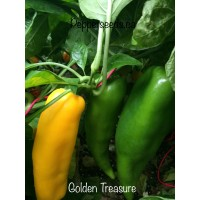 Golden Treasure Pepper Seeds
