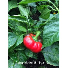 Paradise fruit Tiger Red