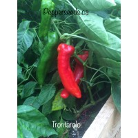 Trontarolo Pepper Seeds