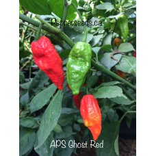 APS Ghost Pepper Red Pepper