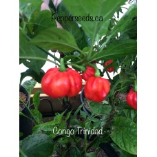 Congo Trinidad Pepper Seeds