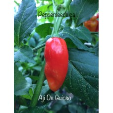 Aji De Guioso Pepper Seeds